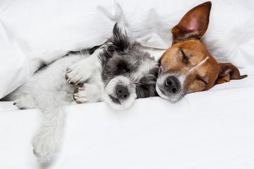 Dormir en la cama con tu mascota